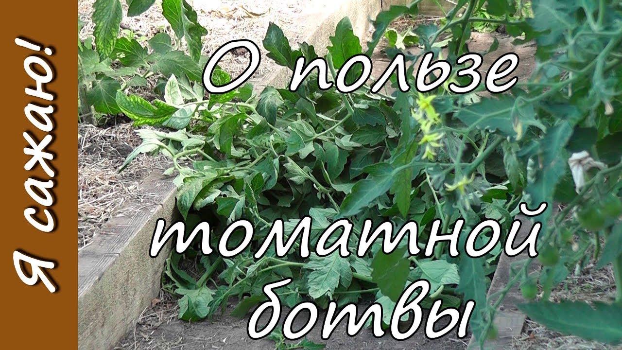 помидорная ботва от вредителей сада и огорода