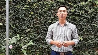Giới thiệu hồng cổ huế giống hồng dễ trồng v…
