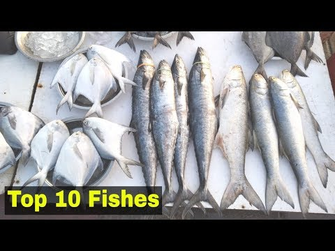 Sassoon Dock मे मिळणे वाली 10 Fishes | Top 10 Fish At Sassoon Dock Fish Market