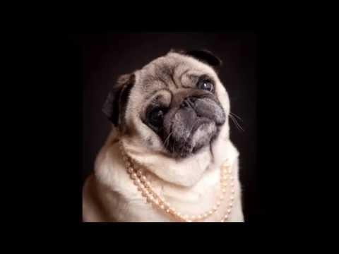 CUTE DOG PHOTO COMPILATION (pies w obiektywie) my best studio shots