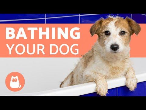 How Often Should I Bathe My Dog?