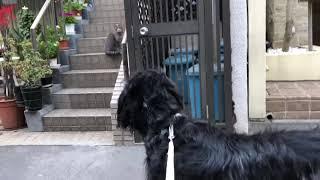 ボン爺ちゃん、猫とご対面。 ボン爺ちゃんは子犬の頃から猫を見ると大興...