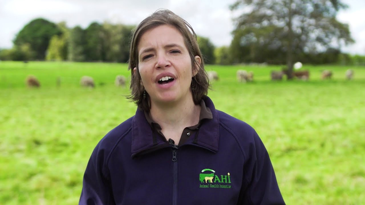 The Beef HealthCheck Programme – cattle liver and lung monitoring