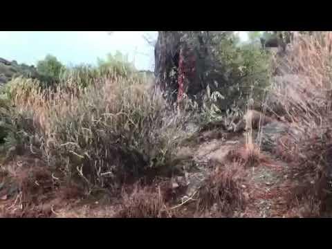 Κατάσβεση πυρκαγιάς από πτώση κεραυνού στο Πραστείο Κελλακίου 15/10/2019