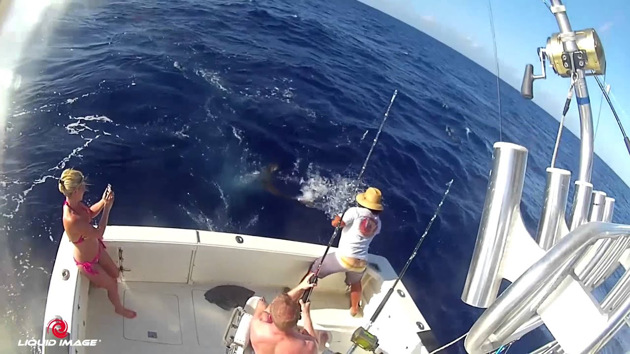 Start me up fishing charters using the ego 727 off the for Fishing in maui