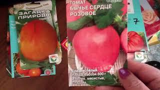 Фото Лучшие томаты этого года Какие томаты больше сажать не буду