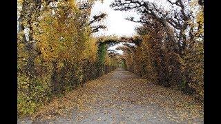 Есенно злато - песен