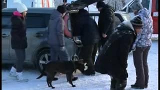 15 собак сгорели заживо. В приюте для бездомных животных в Челябинске взорвался газовый баллон