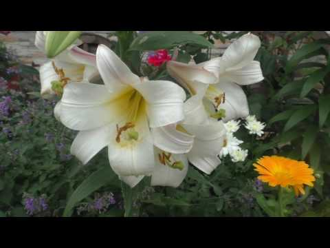 Прекрасный сад моей соседки Эпизод 1