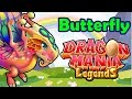 Butterfly Dragon Breeding Guide How To Breed The Butterfly Dragon Dml Dotw 25 - 2nd July