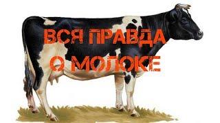 Молоко черно пестрой коровы, мифы и домыслы