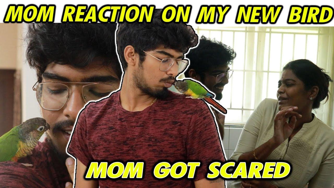 MOM REACTION ON MY NEW JB BIRD || MOM GOT SCARED || #Justbanana
