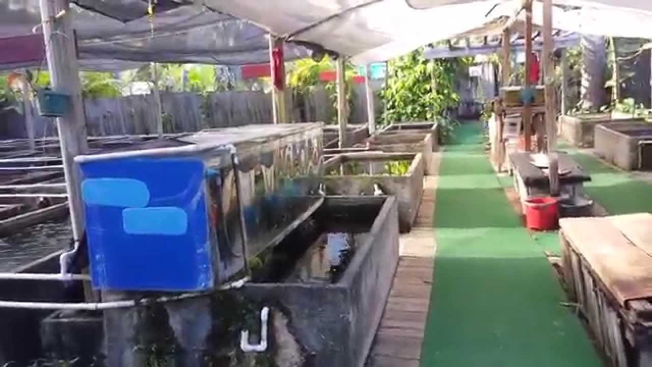neighboorhood fish farm miami youtube