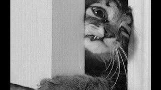 Кот Борис открывает самостоятельно дверь.