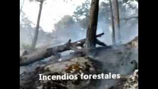 Incendio Forestal En La Sierra del Mezquital, Durango