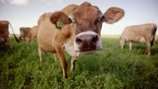 Dairy Farmers Of Wisconsin: The Risk And The Reward