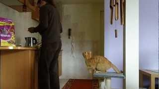 Mój kot kupowałby Whiskas? Benq GH600