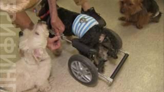 Собаки-инвалиды помогают людям