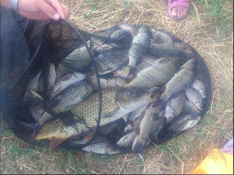 поплавочная снасть для ловли толстолобика