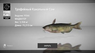 Fishing Planet Как ловить Трофейного Канального Сома на реке Мадвотер