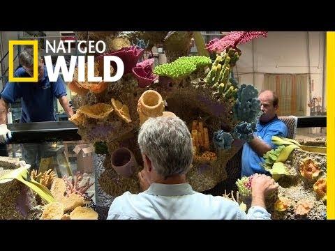 Fishin' Impossible: Coral Crisis   Fish Tank Kings