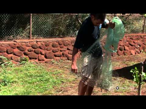 PBS Hawaii - HIKI N? Episode 403 | Molokai High School | How to Throw Net