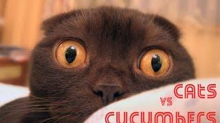 Коты против огурцов | Cats vs cucumbers 2015