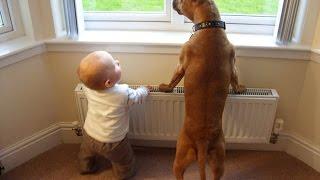 Bébés mignons Jouer avec grands chiens Compilation Janvier 2015 [HD 720p VIDEO]