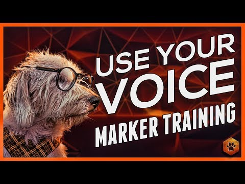 Using Marker Training - Using your Voice with your Dog