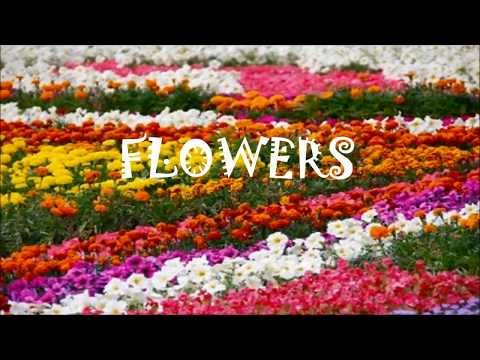 Name Of Flowers | Learn Name Of Flowers | Flowers Name For Kids And Children
