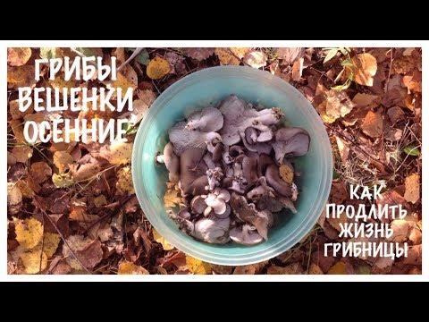 выращивание грибов в аквариуме