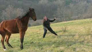 Harold -Horse