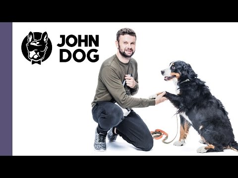 Jak nauczyć psa komendy PODAJ ŁAPĘ - TRENING PSA - John Dog