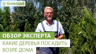 видео Посадка плодовых деревьев на приусадебном участке
