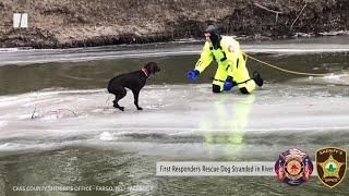 Lucky Labrador's Ice Rescue In North Dakota