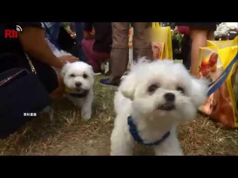 【RTI】Vídeo del día – Nueva Taipéi cuidará de las mascotas de dueños en cuarentena