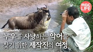Crocodiles hunting the gnu - Wildlife in Serengeti EP03, #02, 누우 포식하는 악어들