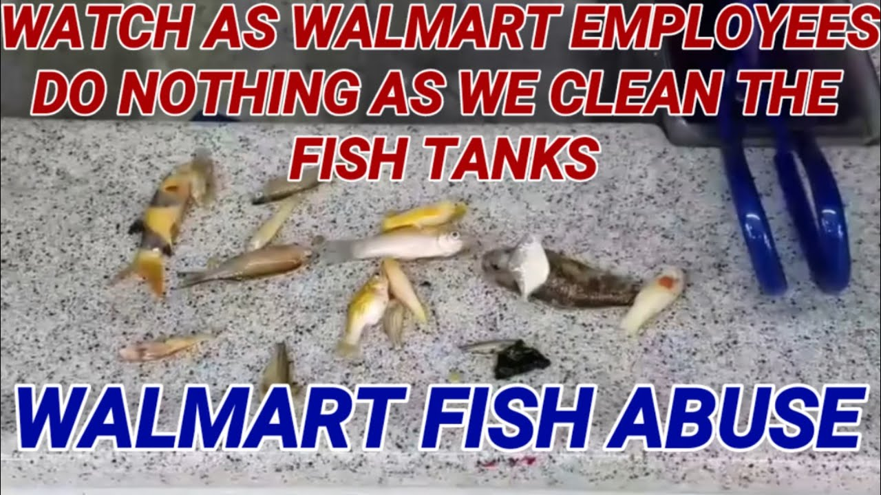 Walmart fish abuse part 1 fish abuse youtube for Walmart fish finder