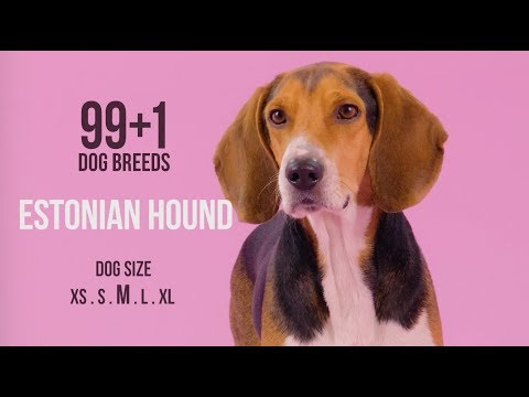Estonian Hound / 99+1 Dog Breeds