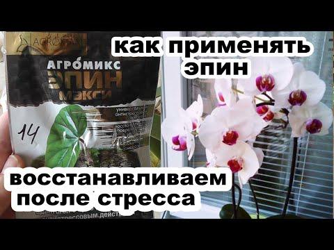 Эпин стимулятор роста растений. Как обрабатывать орхидею эпином Действие эпина на фаленопсис
