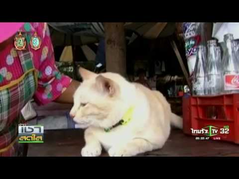 โคราช แมวนำโชค | 16-09-59 | เช้าสดใส | ThairathTV