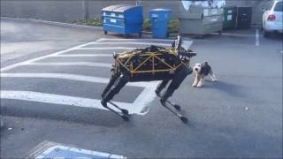 Истории робота-собаки Озвучка Google Внимание, мат!(смешная google озвучка ivona)