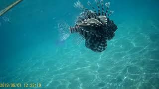 Египет Шарм Эль Шейх Подводный мир Красного моря Отдых в Египте