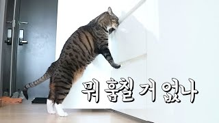 문 따는 기술을 익혀버린 고양이... 괴도 근식