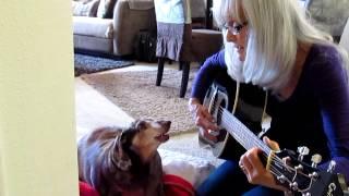 Dachshund Blind Dog Sings