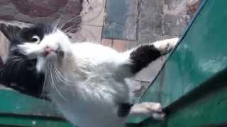 Кот Васька просит  кушать