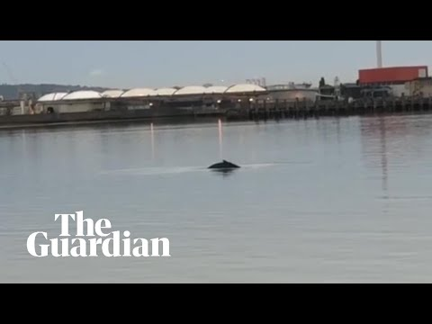 Did the Thames whale come to save us?