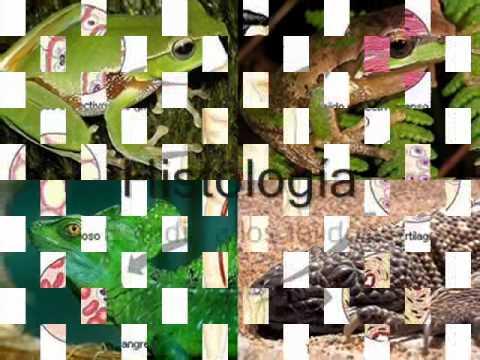 Biologa Ramas y sub ramas de la biologa  YouTube