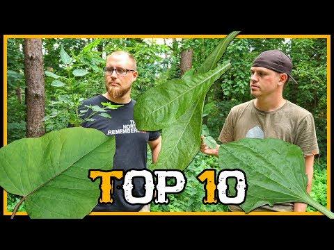 Top 10 Pflanzen und Kräuter für Outdoor Bushcraft Survival - Outdoor Bushcraft Deutschland