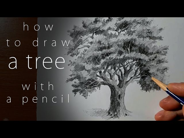how to draw a tree как нарисовать дерево